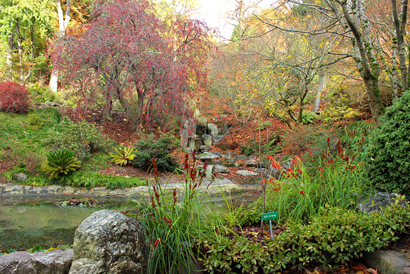 Japanese garden in the Berkeley Botanic Garden