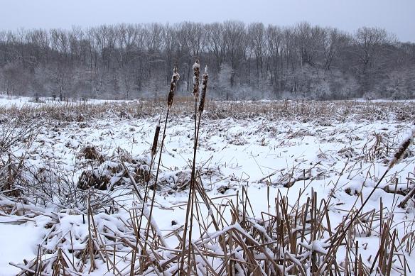 snow-marsh-1