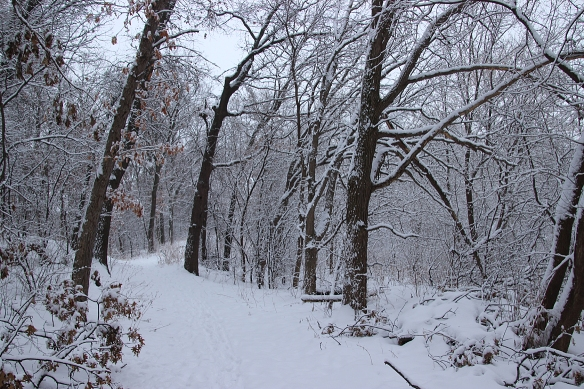snow-trees-1