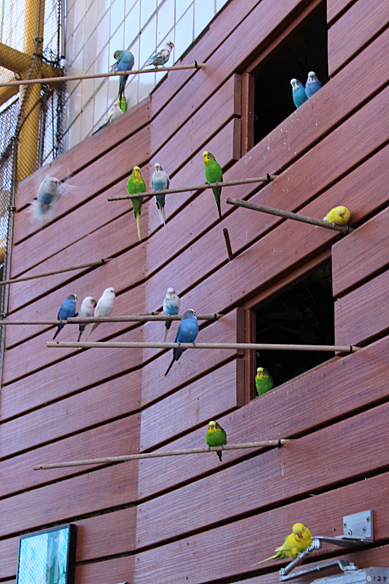 parakeet house at New Orleans Aquarium