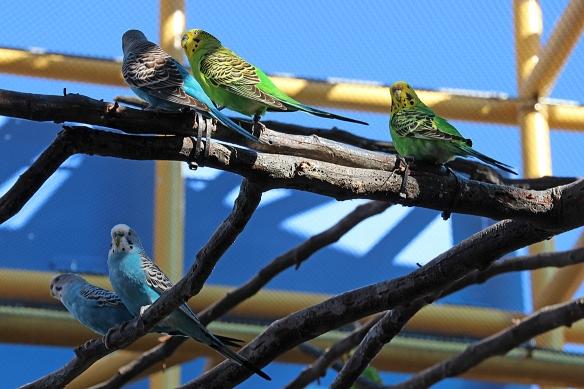 So many colors...so many birdies.