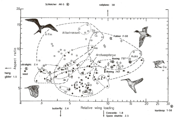 This figure is from an excellent website on Bird Flight.