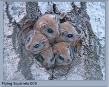 Image result for squirrels nest