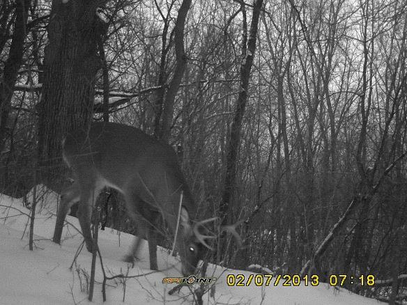I can't tell the does apart, but I can distinguish the two bucks (one has more tines on his antlers than the other).  This is big buck (BB).
