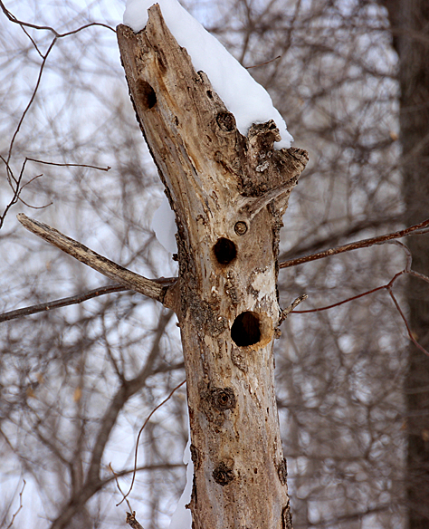 Holes of different sizes might mean it's a recycled home, starting out as a chickadee roost and ending up a squirrel roost.