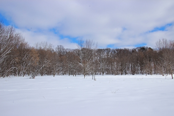 A bleak winter scene of mostly white.  This is the wetland valley behind our house that drains into three ponds.