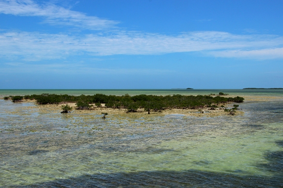 Mangrove islands off the shore of Cayo Coco.