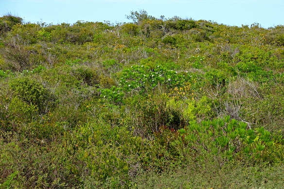 Typical desert scrub habitat on Cayo Coco.  See anything?