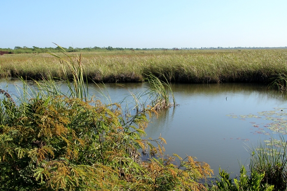 The sawgrass wetland area of the Zapata peninsula looks (and functions) much like the Everglades in Florida.