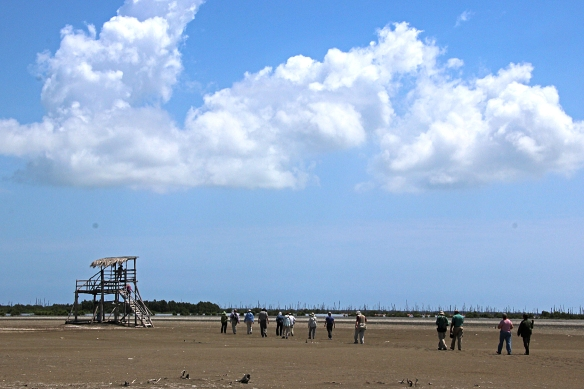Then, a long walk across the flood plain of the Rio Maximo to a viewing platform overlooking open water and mangrove swamp.