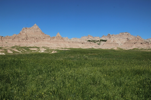 Even in the Badlands, there is some green.