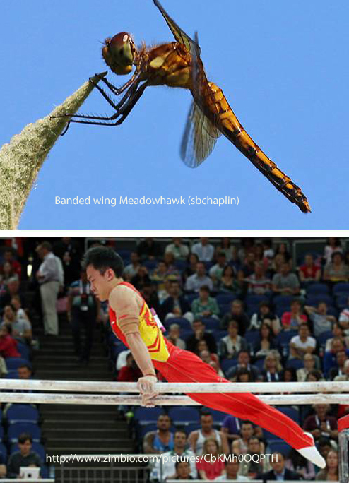 dragonfly vs human - semi-vertical pose