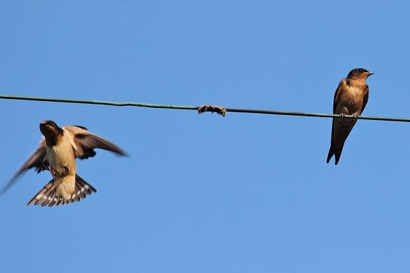 feeding juvenile birds | Back Yard Biology