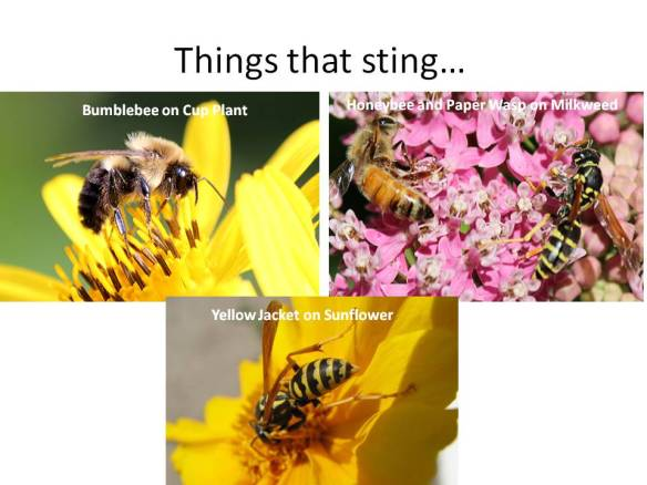 The things that sting have bright yellow and black coloration; some have fuzzy hair and some don't -- even that pattern is copied.