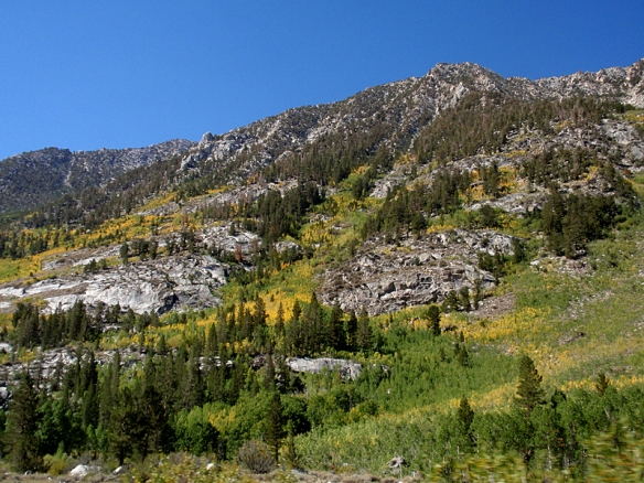 The aspens glow yellow on the slopes above Bishop, California.