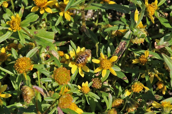Honeybees, bumblebees, flies of all sizes generated a low hum of activity among the flowers.