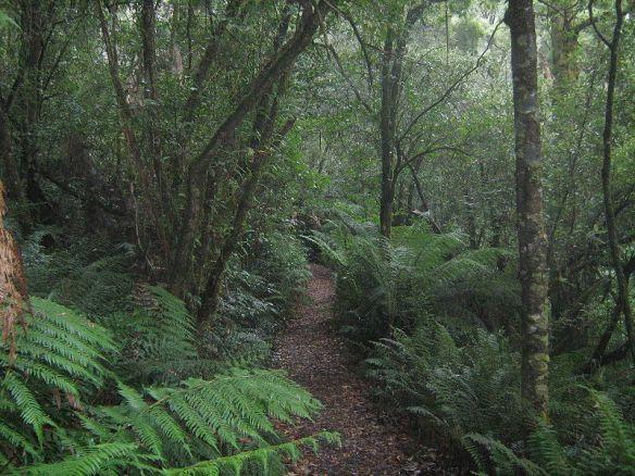 Real temperate rainforest in Victoria, BC, Canada.