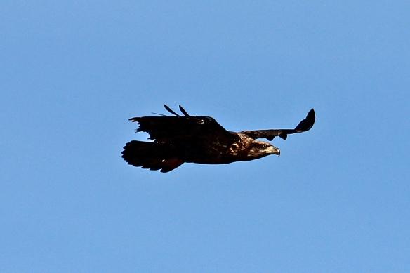 This eagle profile kind of looks like the image the U.S. postal service uses.
