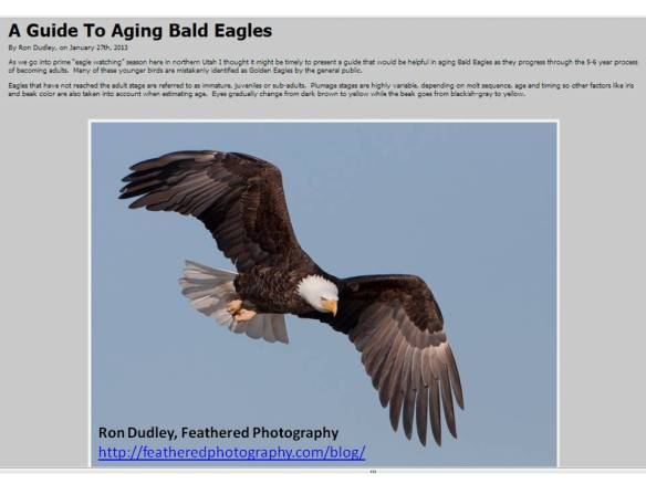Ron Dudley-Feathered Photography-Guide to Aging Bald Eagles