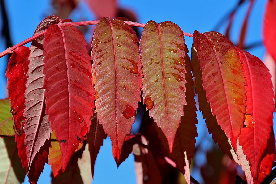 ... xanthophyll... Xanthophyll Pigment