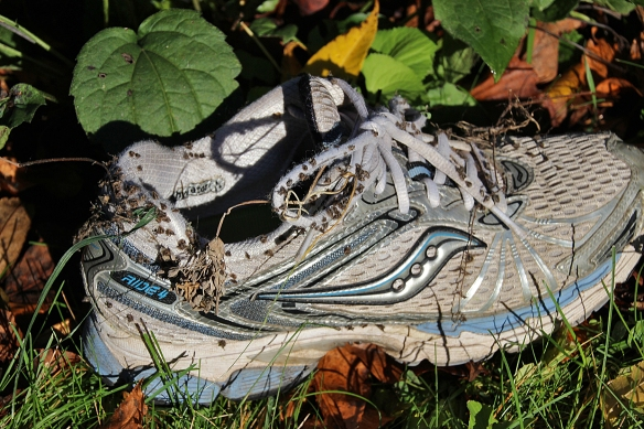 A five minute stroll to the woodpile netted a large batch of stickseeds on my shoes.