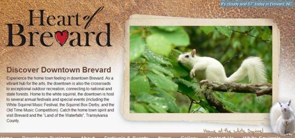 whitesquirrel-Brevard NC