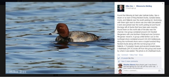 Mike Dec's photo from the Minnesota Birding Facebook page, 11-25-13