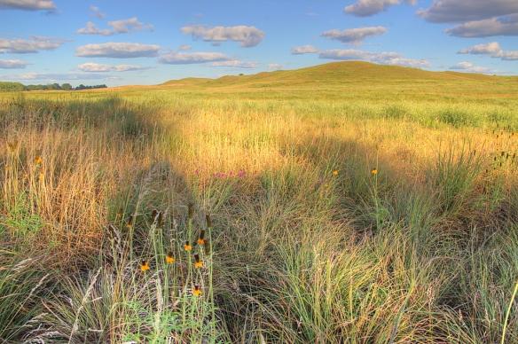 Cottonwood prairie SNA - July 28, 2013
