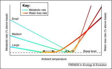 Avian Energy Balance and Thermoregulation (http://people.eku.edu/ritchisong/birdmetabolism.html)