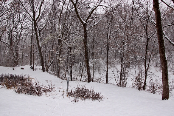 The backyard is silent as a sheet of snow drifts quietly down.  Flakes too small to see coat everything.