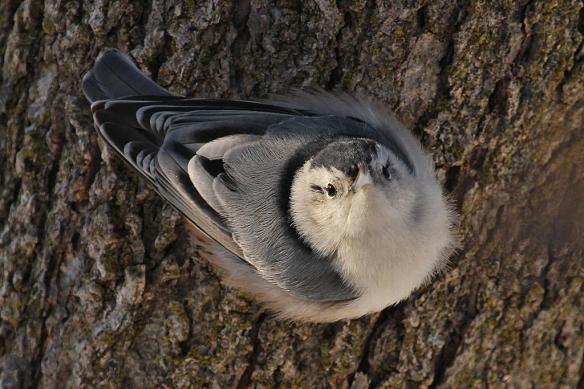 The full-on beak face