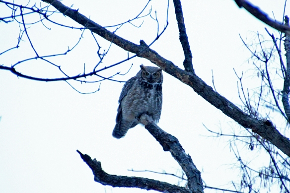 Really overexposing the image (+2 f-stops) finally reveals some of the owl's features but the white sky is distracting.