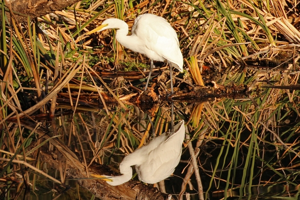 It's difficult to photograph white birds in bright sun; I think the reflection actually gives better contrast.