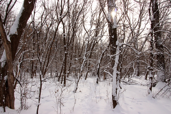 It was still snowing lightly as I made a snowshoe track through the woods, so the light is very flat.