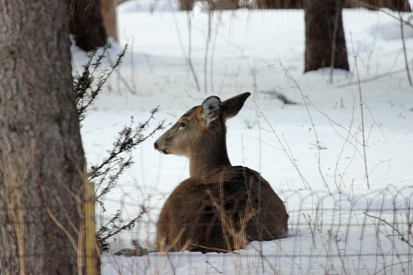 I disturbed her morning ruminations by poking the camera lens out the window (brrrr.....)