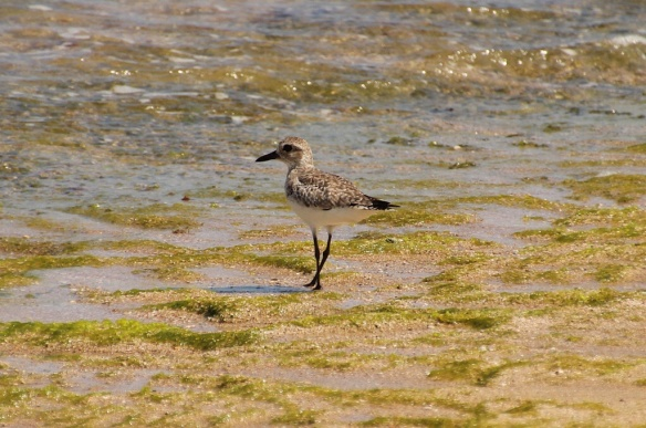 A lone sandpiper was the sole inhabitant of this beach
