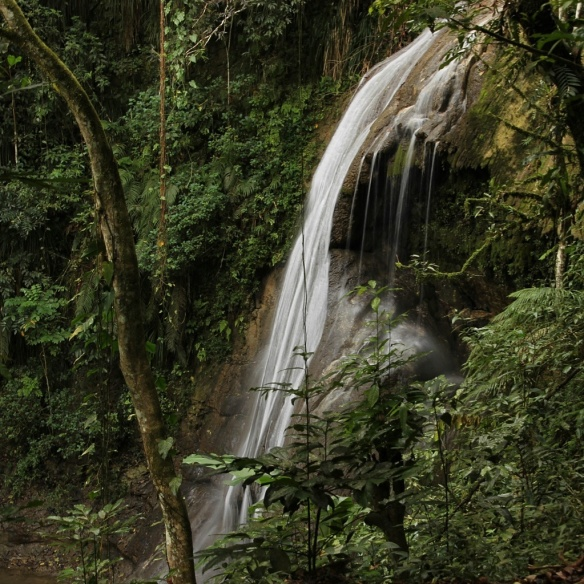 A ribbon of white water goes over the edge of the limestone in this lush tropical forest.