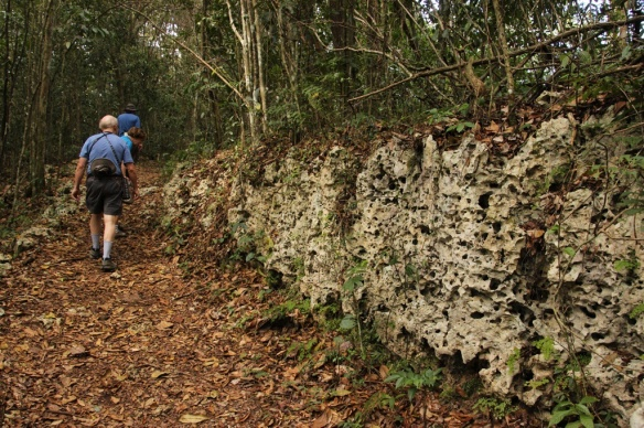 "A good example of the ""holey"" limestone that makes up the karst substrate of most of western and west-central Puerto Rico."
