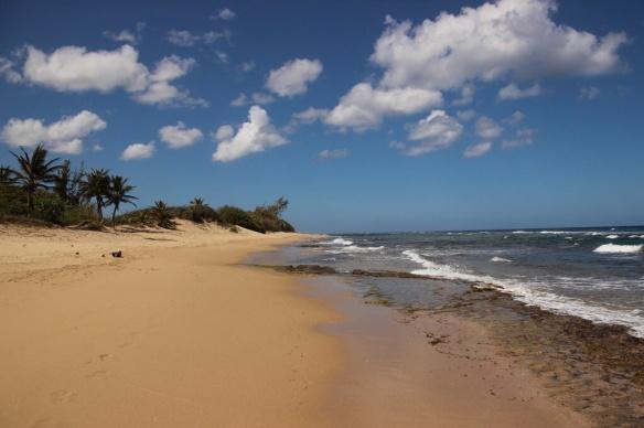 On Playa Isabela, at the northwest corner of Puerto Rico