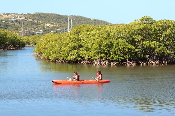 kayaking in mangroves