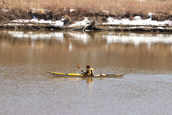 A lone kayaker braved the chilly water of the Minnesota River.  But what a great way to sneak up on the ducks!