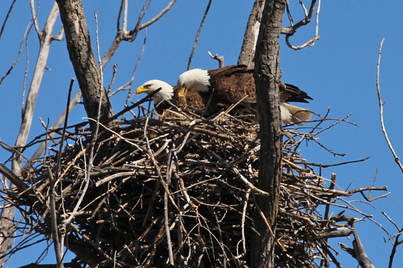 """Hey, look at this great fuzzy stuff I got to line the nest""."