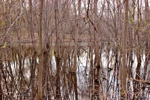 The flooded forest at Roberts Bird Sanctuary in Minneapolis.