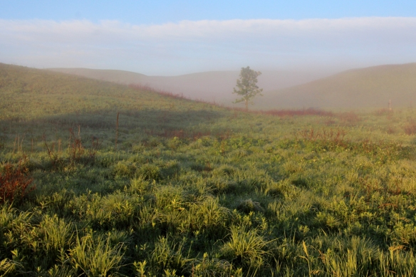 After a furious thunderstorm, a thick layer of fog hung over the prairie the next morning.