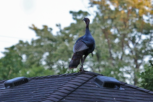 What was he doing up there -- looking around the neighborhood?