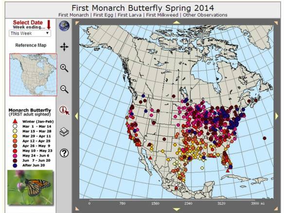 Journey North - Monarch Butterfly migration spring 2014