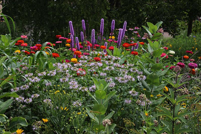 Summer back yard biology page 3 for Wildflower garden designs