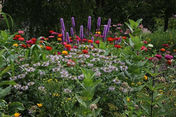 So pretty back yard biology for Wildflower garden designs