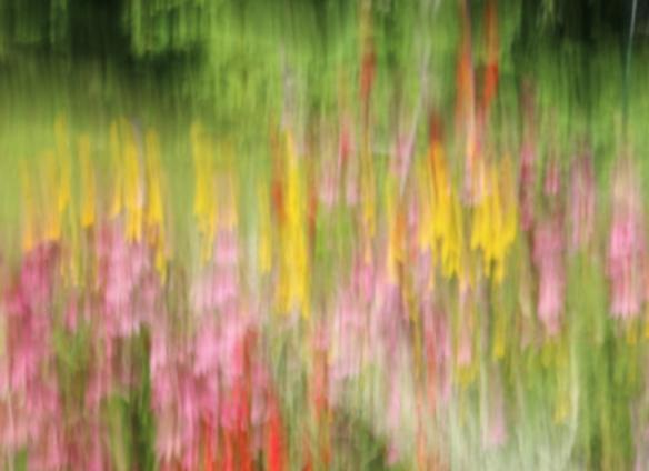 drag technique on a wildflower garden