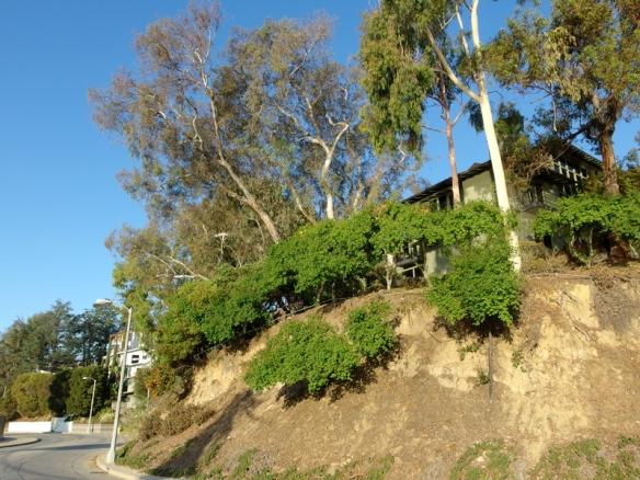 silverlake resevoir, Los Angeles CA